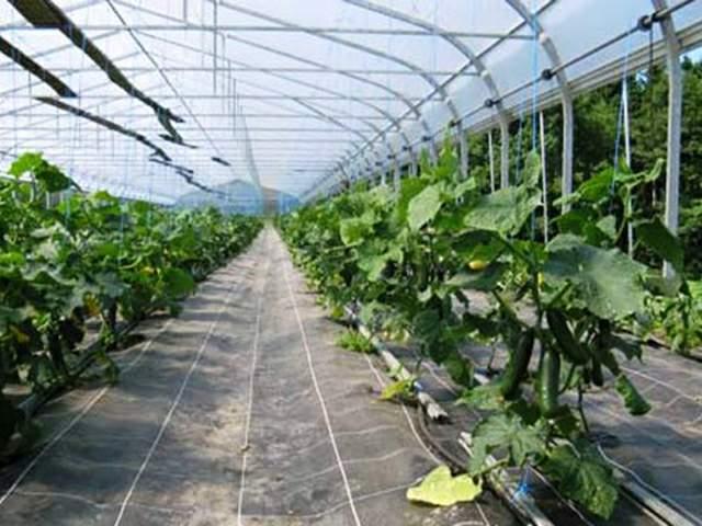 agrofolia üzletág agroszövet termékkép 1