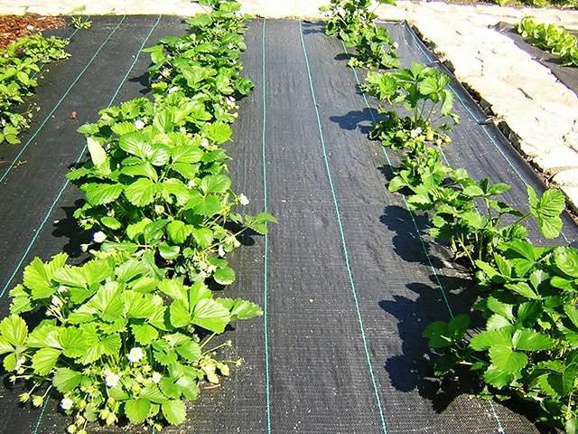agrofolia üzletág agroszövet termékkép 3
