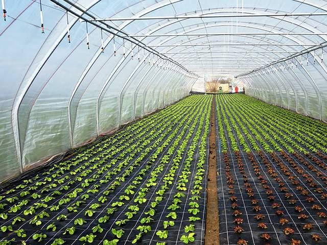 agrofolia üzletág belső fólia termékkép 1