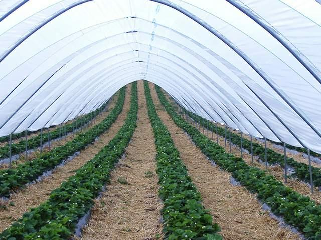 agrofolia üzletág belső fólia termékkép 2