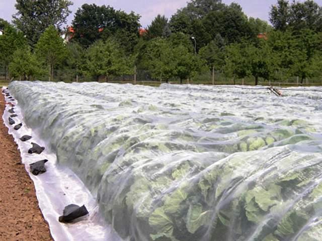 agrofolia üzletág fátyol fólia termékkép 1