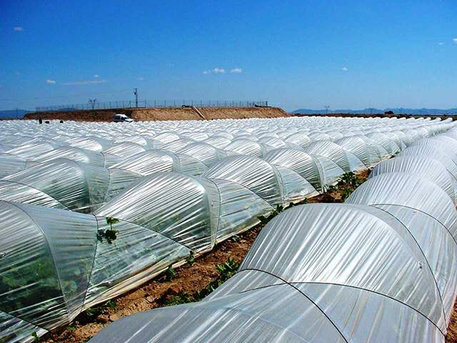 agrofolia üzletág kisalagút fólia termékkép 1