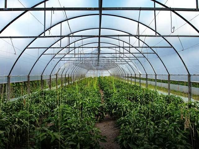 agrofolia üzletág natúr fólia termékkép 2