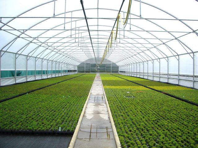 agrofolia üzletág satorfolia palastfolia termékkép 2