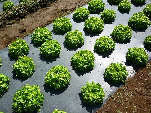 agrofolia üzletág takarófólia termékkép 1