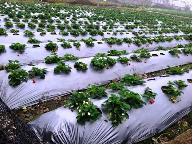 agrofolia üzletág takarófólia termékkép 2