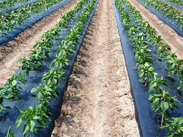 agrofolia üzletág takarófólia termékkép 3