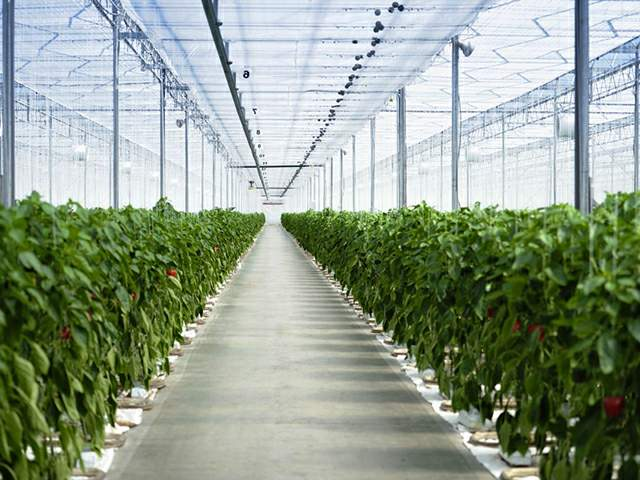 agrofolia üzletág bemutatása termékkép 1