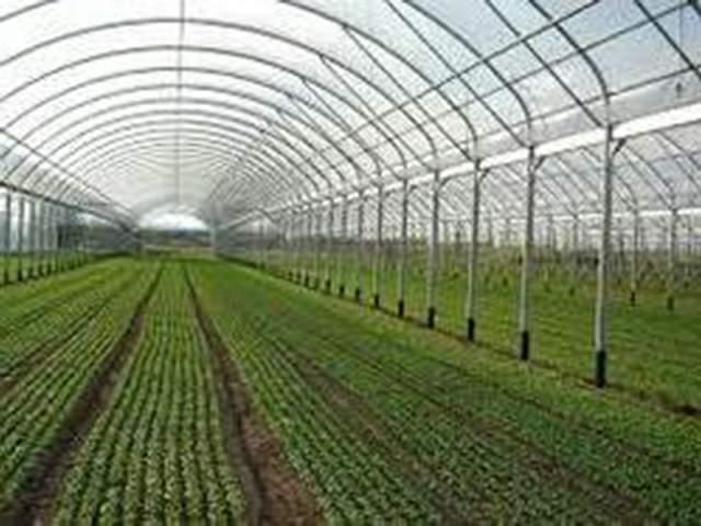 agrofolia üzletág bemutatása termékkép 3